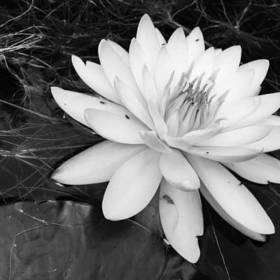 Photograph - Water Lilly  by Susan Detroy