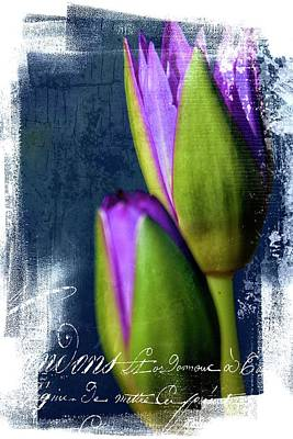 Photograph - Water Lilly Textured by Alice Gipson