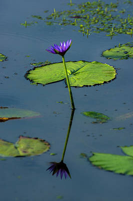 Art Print featuring the photograph Water Lily 2 by Buddy Scott