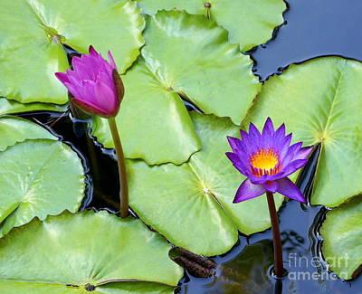 Photograph - Water Lily 2 by Rachel Munoz Striggow