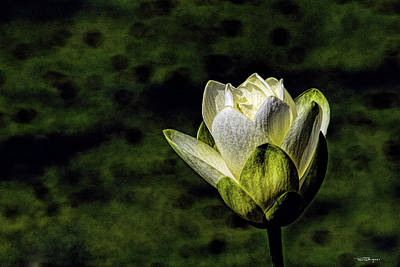 Photograph - Water Lily 2 by Travis Burgess
