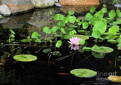 Kitchen Signs Rights Managed Images - Water Lily 2 Royalty-Free Image by Victor K