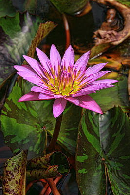 Photograph - Water Lily 29 by Allen Beatty