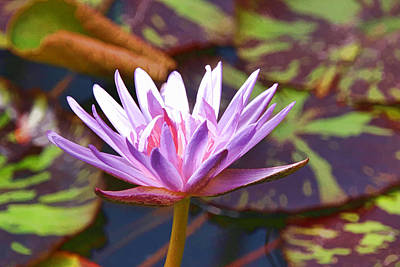 Photograph - Water Lily 31 by Allen Beatty