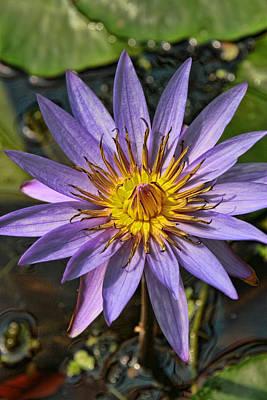 Photograph - Water Lily 33 by Allen Beatty