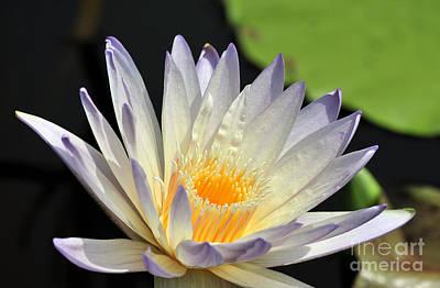 Western Art - water lily 48 Green Smoke by Terri Winkler