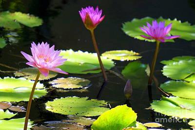Photograph - Water Lily 5 by Rachel Munoz Striggow