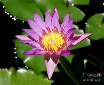 Photograph - Water Lily 8 by Rachel Munoz Striggow
