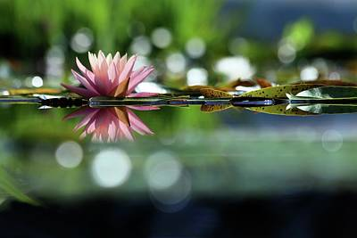Lucille Ball - Water Lily And Bokeh by Carol Montoya
