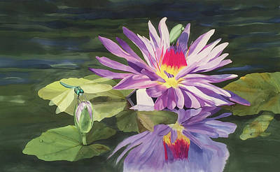 Wall Art - Painting - Water Lily And Sparhawk by Carol P Sullivan