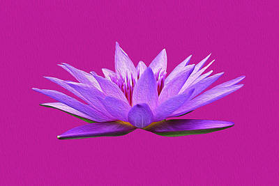 Photograph - Water Lily by Anthony Murphy