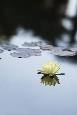 Photograph - Water Lily Balboa Park by John Noel
