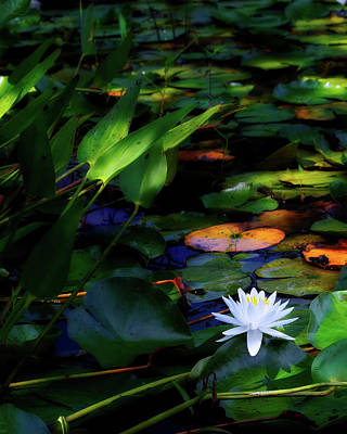 Single Flower Photograph - Water Lily by Bill Wakeley