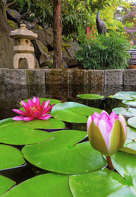 Photograph - Water Lily Blooming In Backyard Pond by Jit Lim