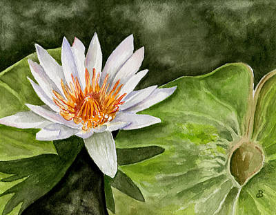 Painting - Water Lily by Brenda Owen