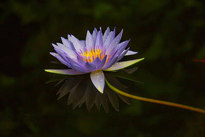 Waterlily Photograph - Water Lily Close Up by Garry Gay