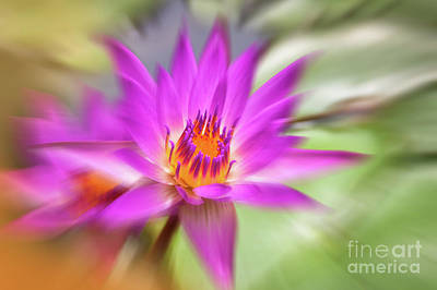 Lilies Royalty-Free and Rights-Managed Images - Water lily by Delphimages Photo Creations