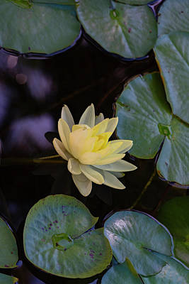 Photograph - Water Lily by Dennis Reagan