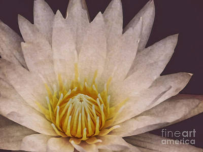 Photograph - Water Lily Digital Painting by Dawn Gari