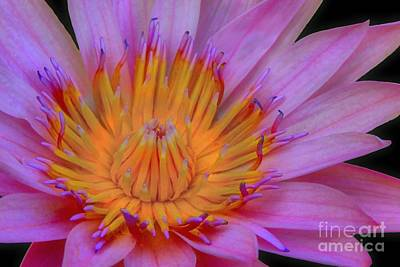 Photograph - Water Lily by DJ Florek