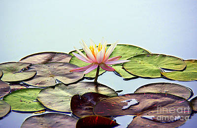 Photograph - Water Lily Dream by Lisa L Silva