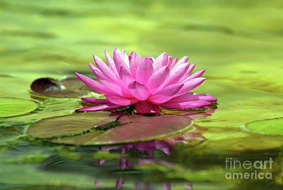 Photograph - Water Lily by Elizabeth Winter