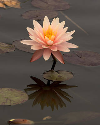 Photograph - Water Lily by Ernie Echols