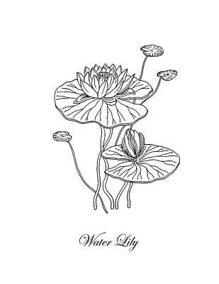 Floral Drawings - Water Lily Flower Botanical Drawing  by Irina Sztukowski