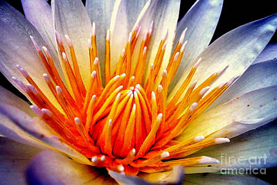 Photograph - Water Lily Flower by Jolanta Anna Karolska