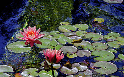 Photograph - Water Lily Garden by Marie Hicks