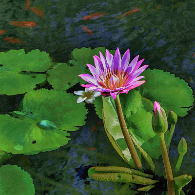 Photograph - Water Lily by Gary Eyring
