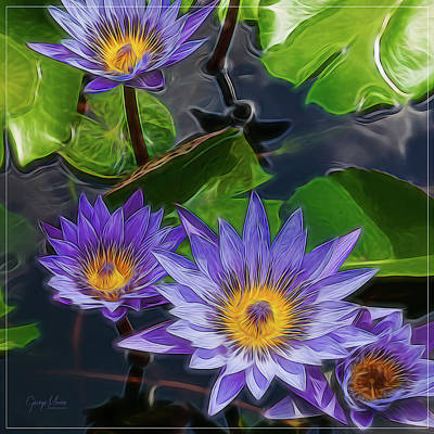 Water Lily Art Print by George Moore