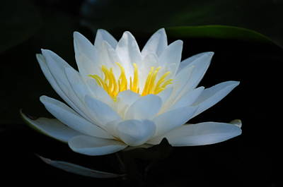 Photograph - Water Lily Glow by Janis Knight