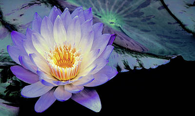 Photograph - Water Lily In Lavender by Julie Palencia