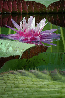 Photograph - Water Lily In Lily Pads by Craig Strand