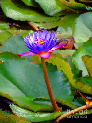 Photograph - Water Lily In Tahiti by Sue Melvin