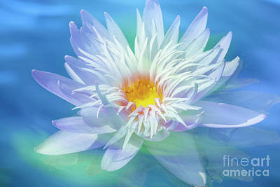 Photograph - Water Lily In  Turquoise Pond by Heiko Koehrer-Wagner