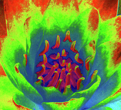 Photograph - Water Lily - Into The Fire - Photopower 3515 by Pamela Critchlow