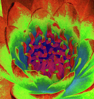 Photograph - Water Lily - Into The Fire - Photopower 3516 by Pamela Critchlow