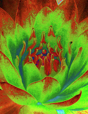 Photograph - Water Lily - Into The Fire - Photopower 3517 by Pamela Critchlow