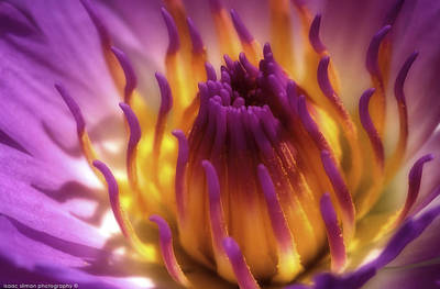 Photograph - Water Lily by Isaac Silman