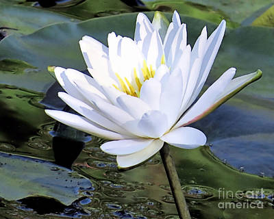 Photograph - Water Lily by Janice Drew