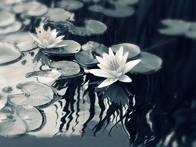 White Water Lilies Photograph - Water Lily by Jessica Jenney