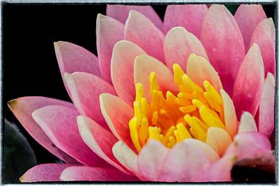 Music Figurative Potraits - Water Lily by Jonathan Nguyen