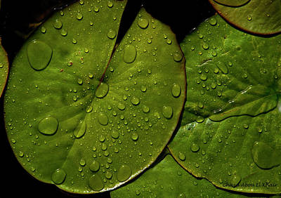 Photograph - Water Lily Leaf by Chaza Abou El Khair