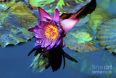 Photograph - Water Lily Magic by Teresa Zieba
