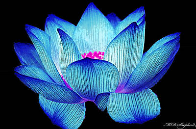 Digital Art - Water Lily by MS  Fineart Creations