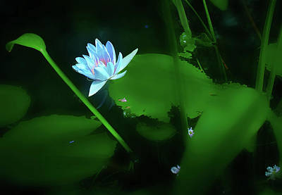 Photograph - Water Lily N Pond by Joseph Hollingsworth