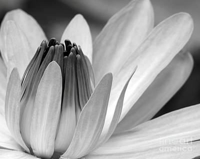 Delray Beach Photograph - Water Lily Opening by Sabrina L Ryan