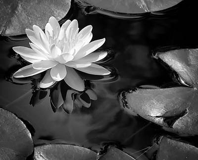 Photograph - Water Lily by Peg Runyan